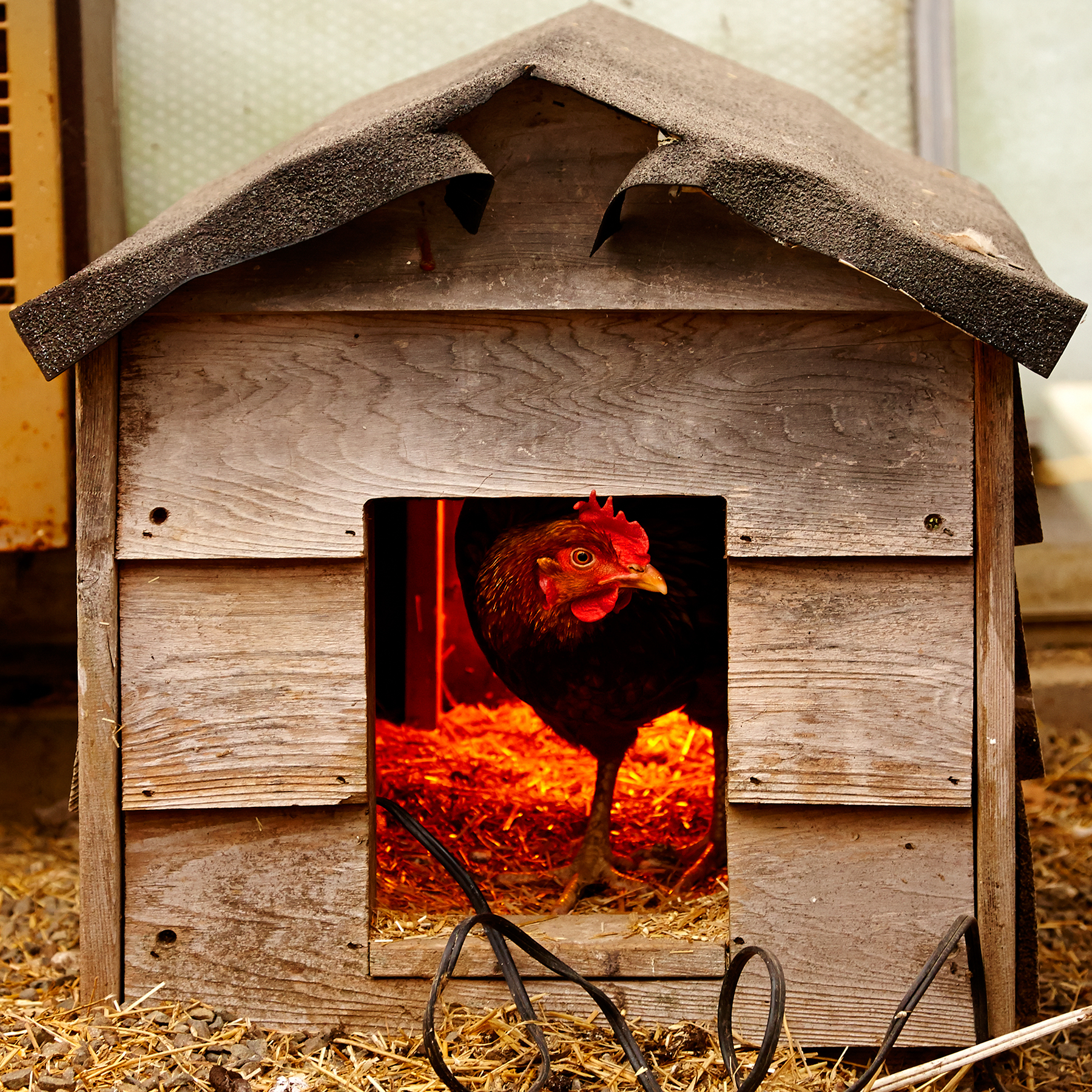 HEN-IN-FARM-HOUSE-01-WILTSHIRE-FARM-©-JONATHAN-R.-BECKERMAN-PHOTOGRAPHY.jpg