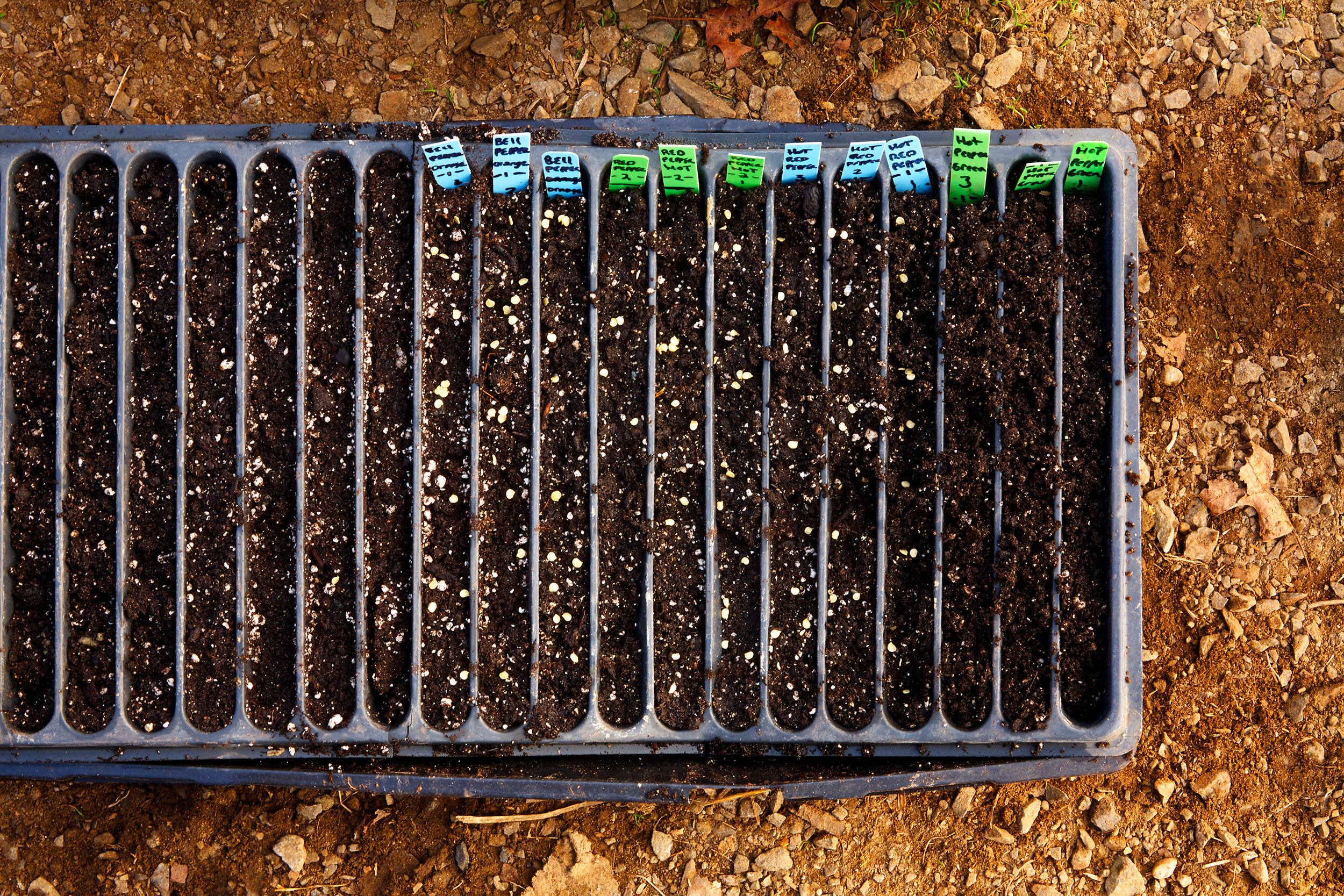 SEED-TRAY-ORGANIC-GARDEN-032413_SIGNS-OF-SPRING-©-JONATHAN-R.-BECKERMAN-PHOTOGRAPHY.jpg