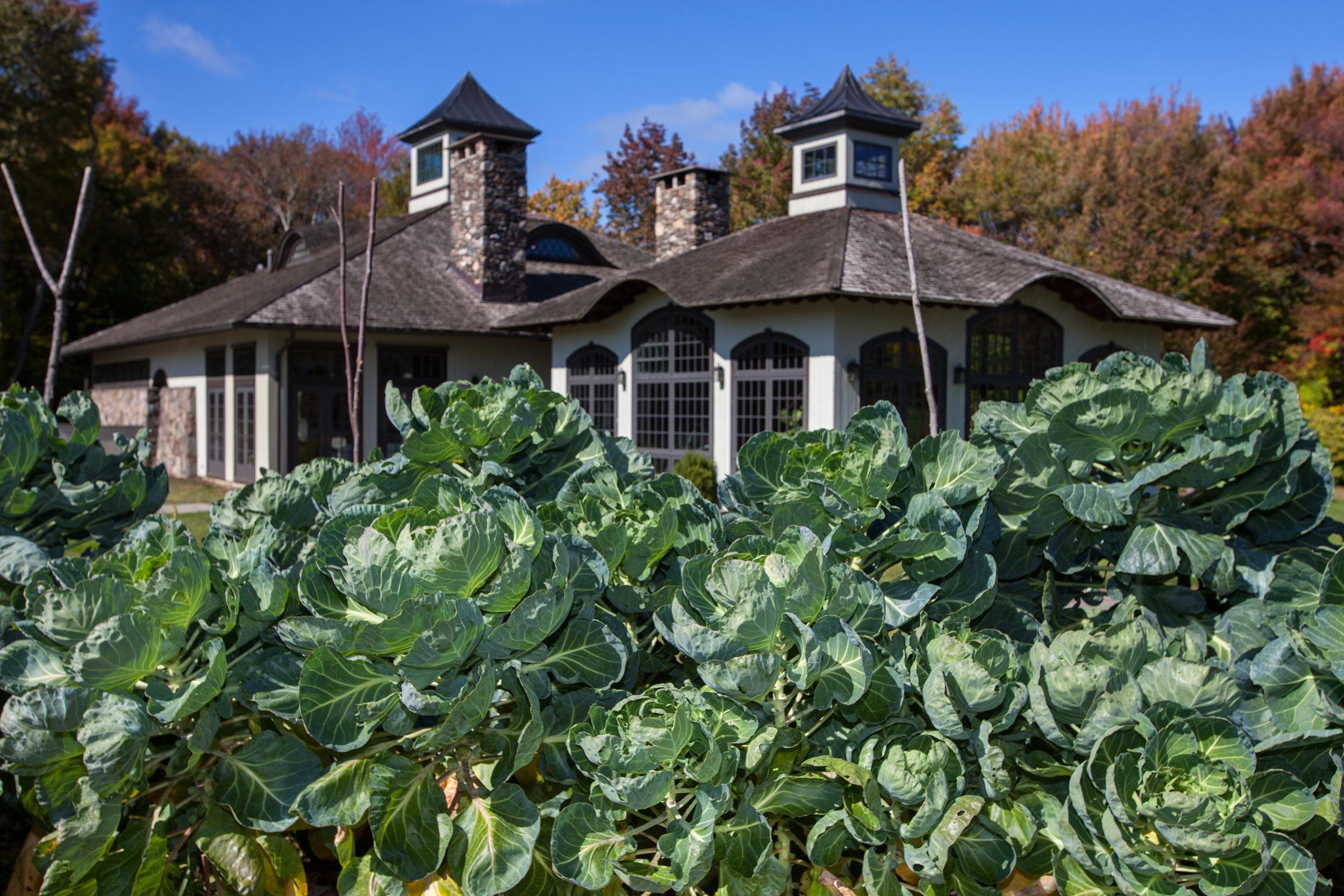 WINVIAN-FARM-CT-GARDEN-LANDSCAPE-©-JONATHAN-R.-BECKERMAN-PHOTOGRAPHY-100715_-483.jpg