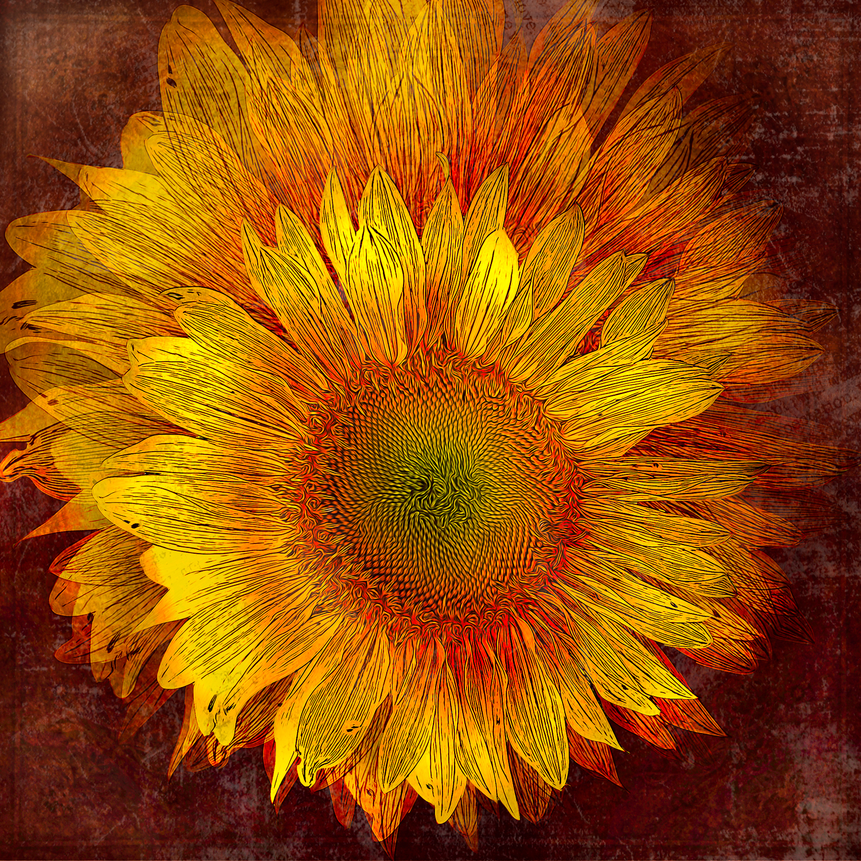 Flowers-_HWF5096 copy.jpg