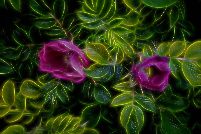 Flowers-_LGF5448-Edit-Edit.jpg