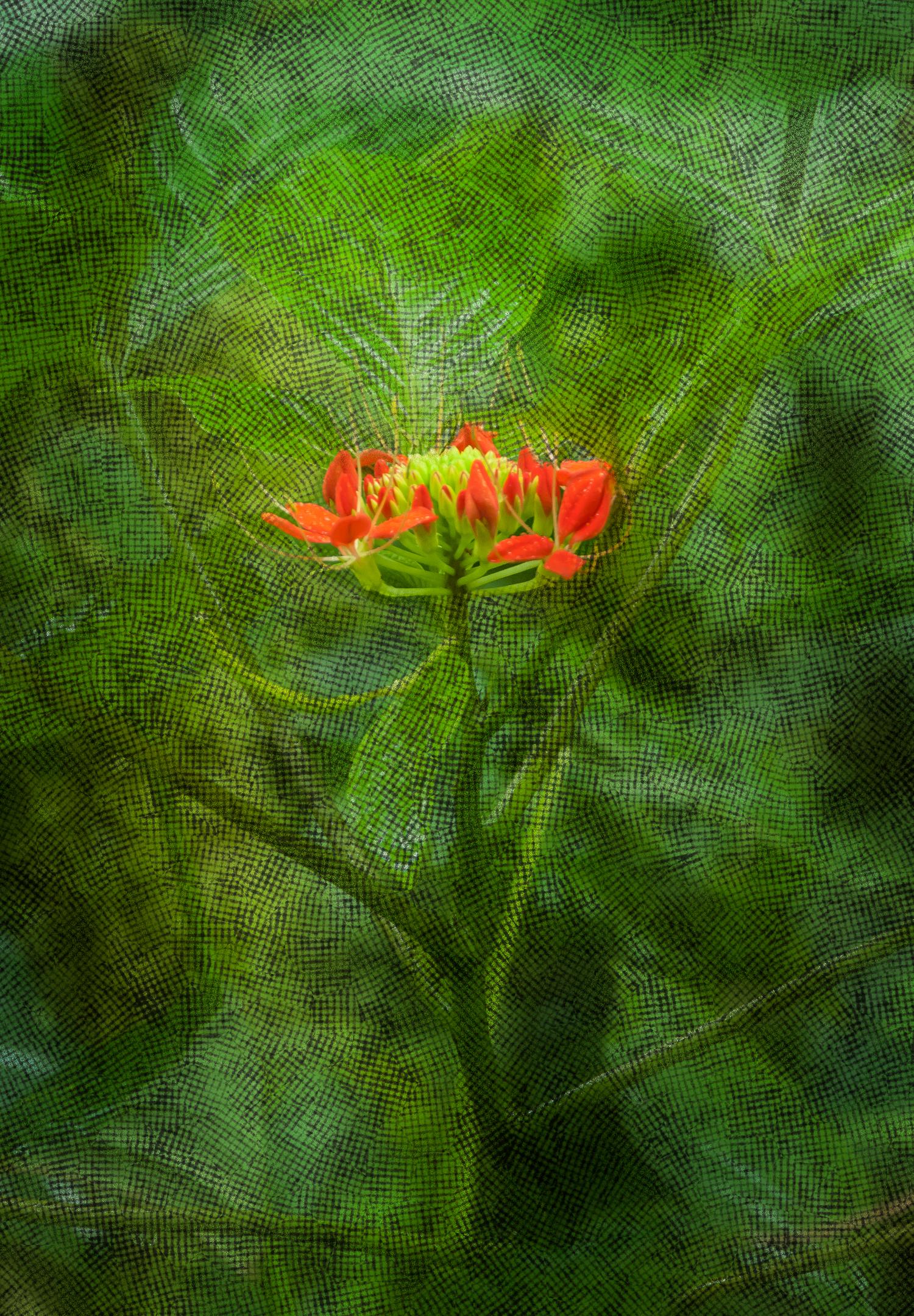 Flowers-_LGF3117-Edit.jpg