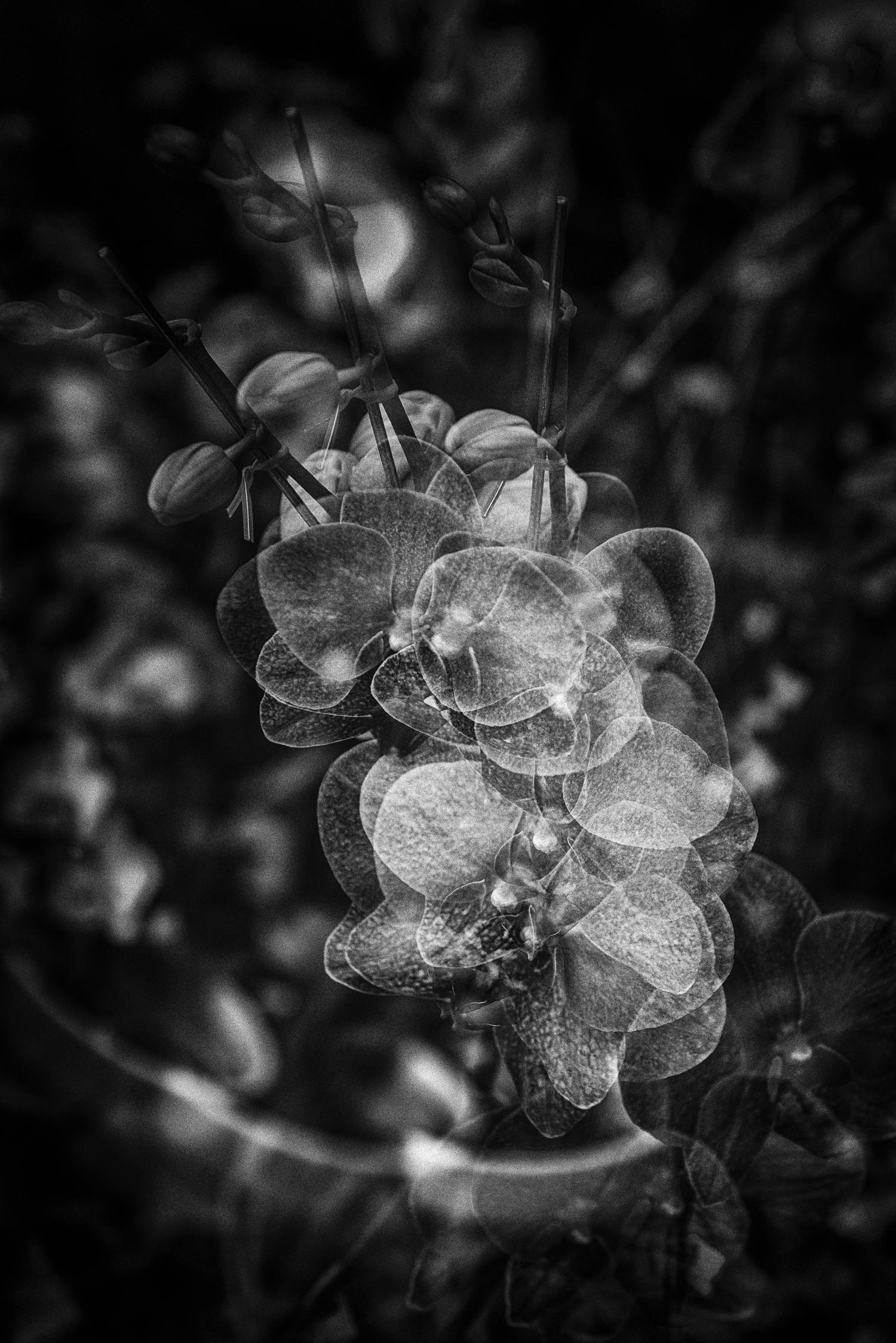 Flowers-_LGF8348-Edit.jpg