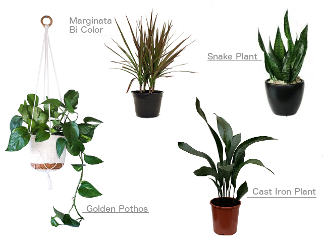 easy indoor house plants
