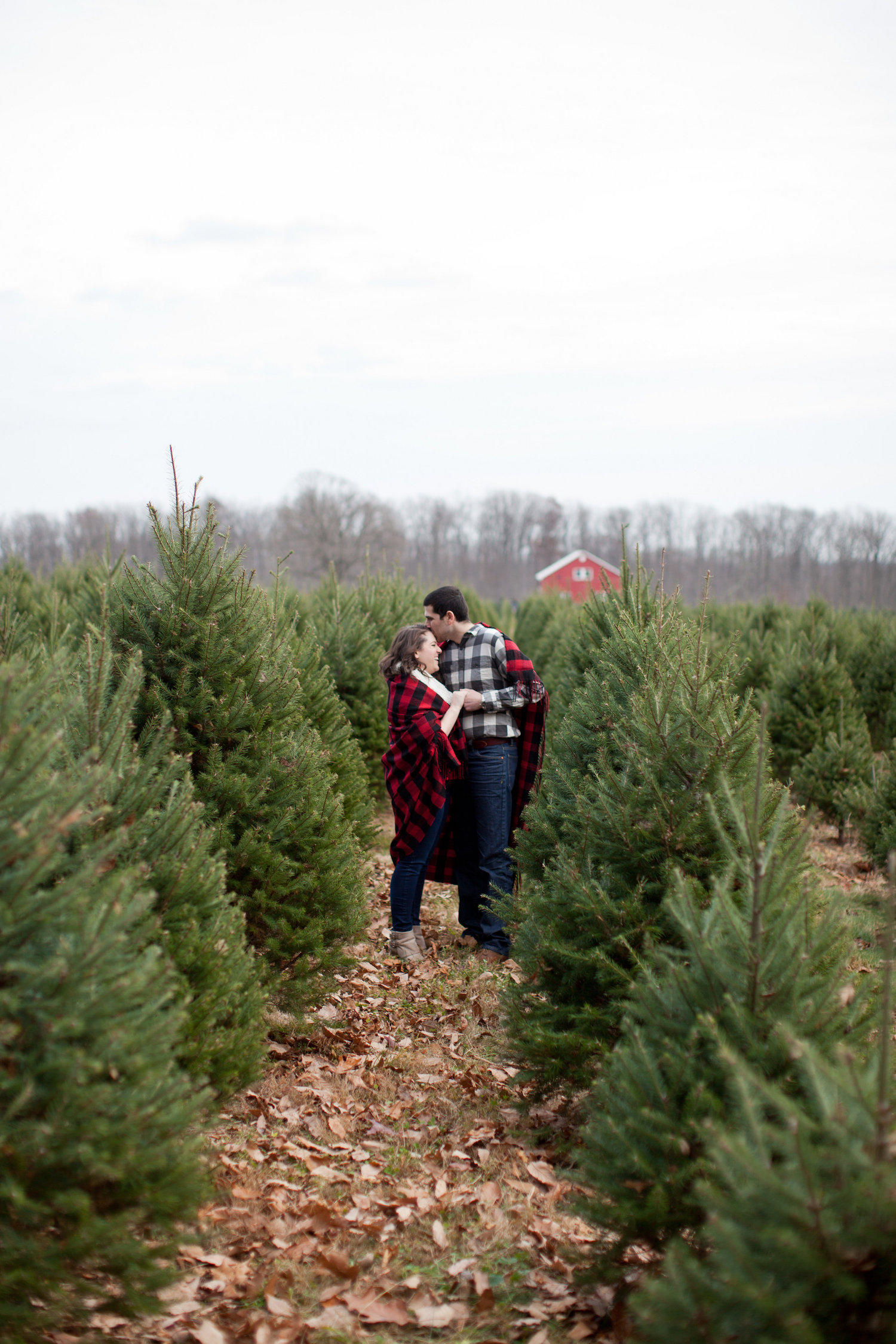 Red and White Christmas Tree Farm Engagement Shoot Sincerely Pete Events Liz and Ryan Photography