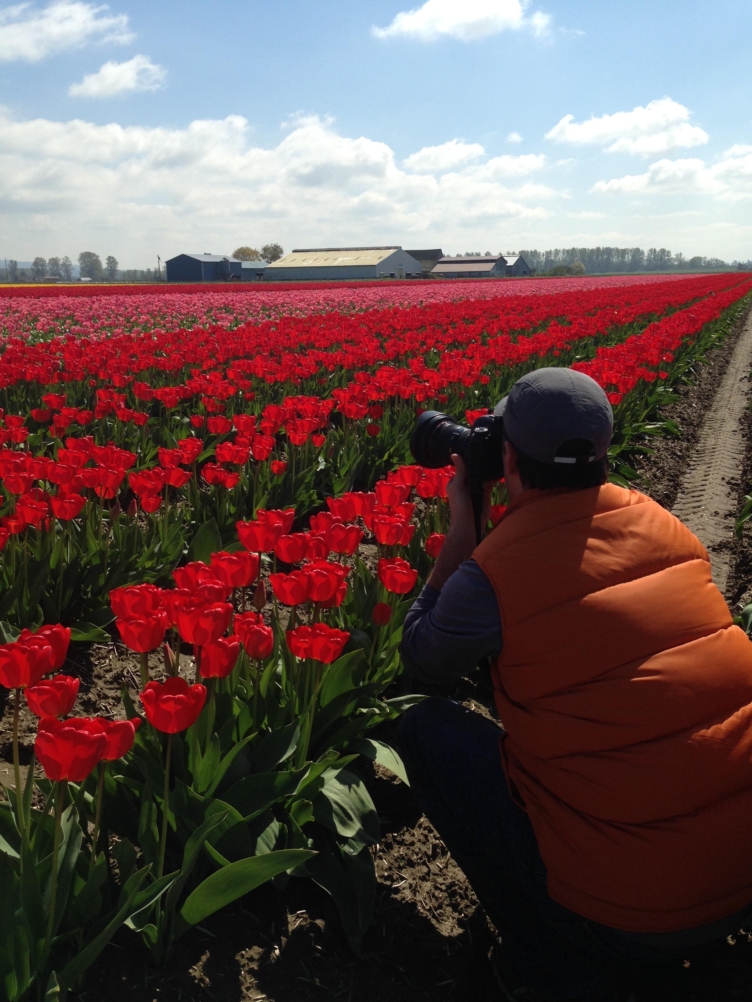 Dave Gordon Photographer Tulip Seattle.jpg