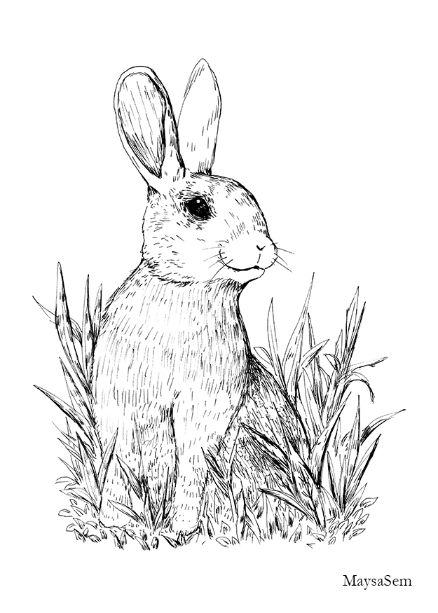 Rabbit in Nature