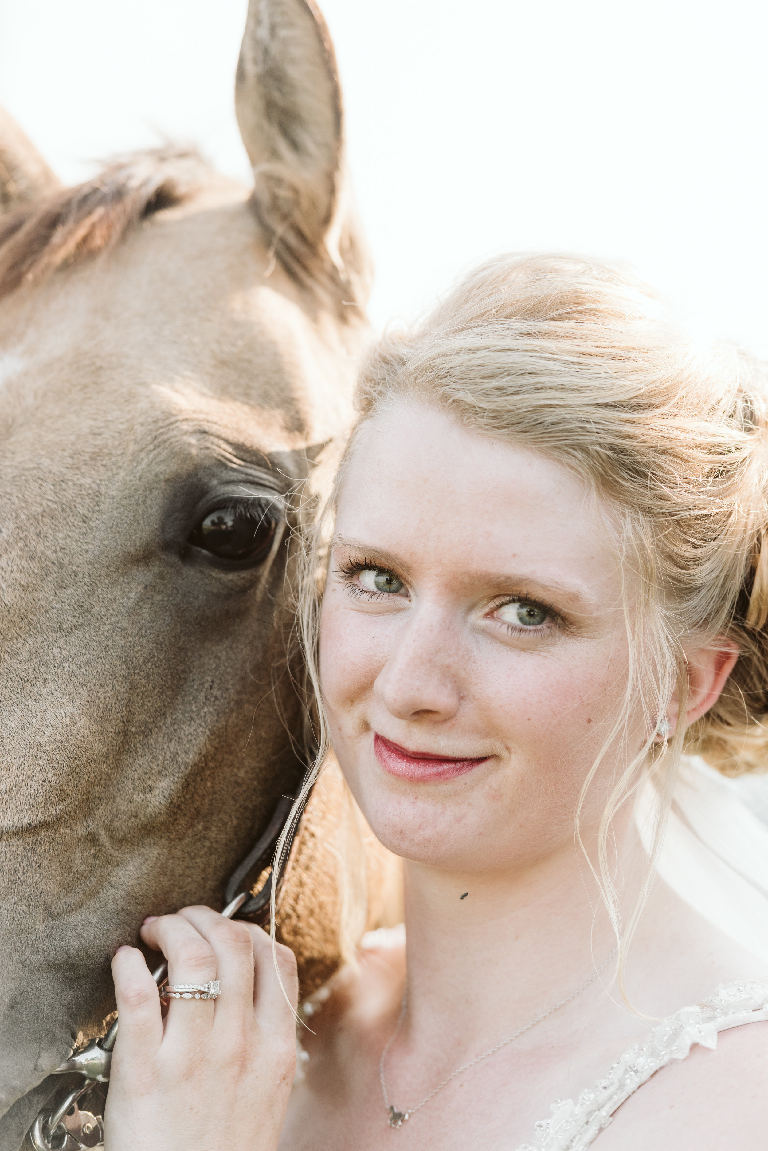 Horse Portrait Photographer