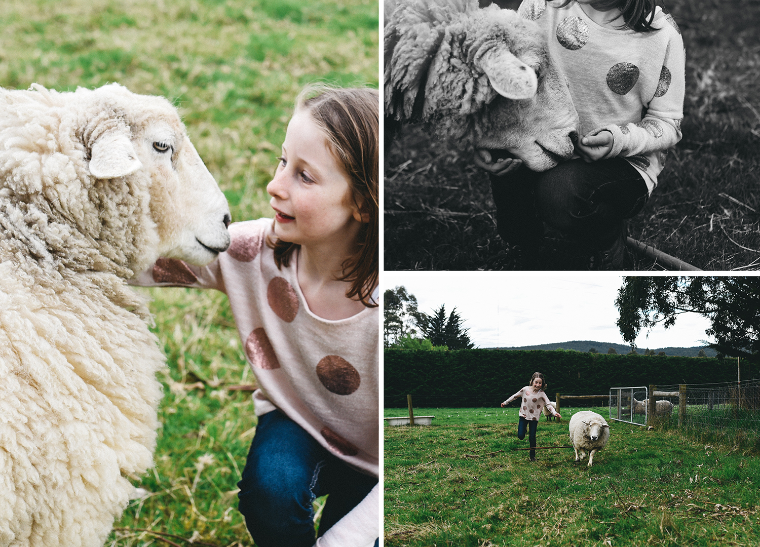 dunedin family lifestyle farm photographer animals kids