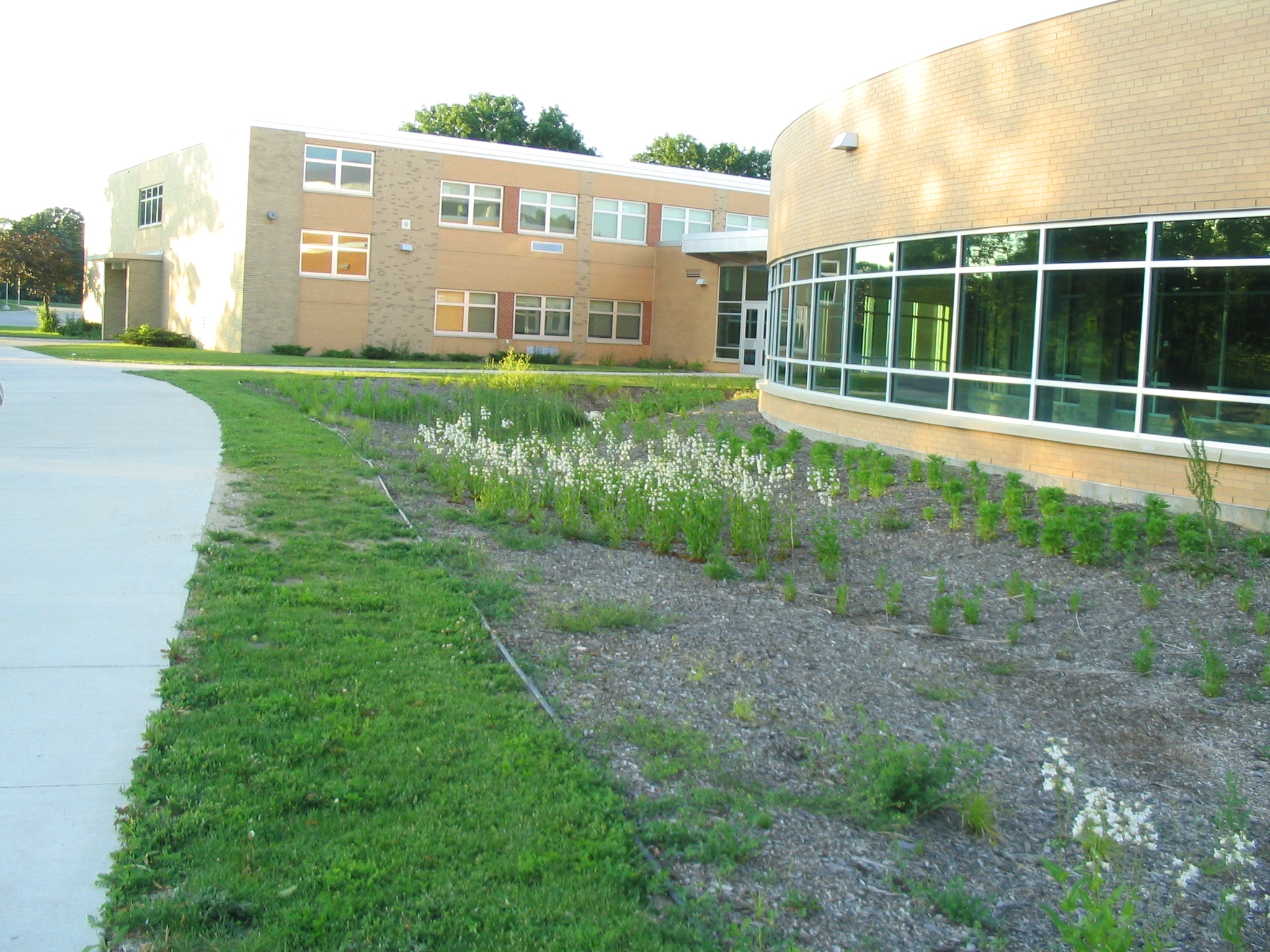 Rain Garden at New Berlin Schools 1.JPG