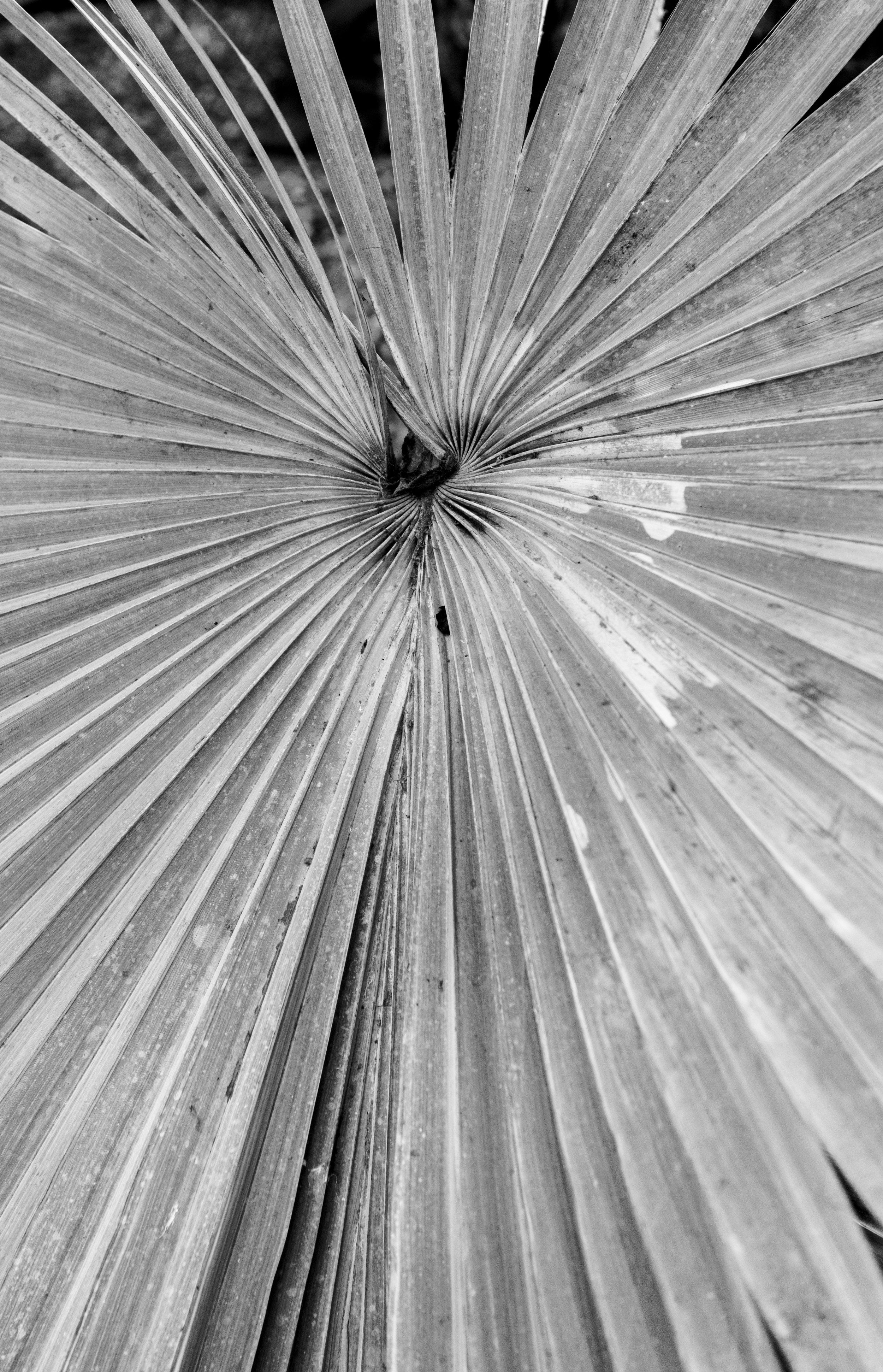 Sheffield Winter Garden 2.jpg