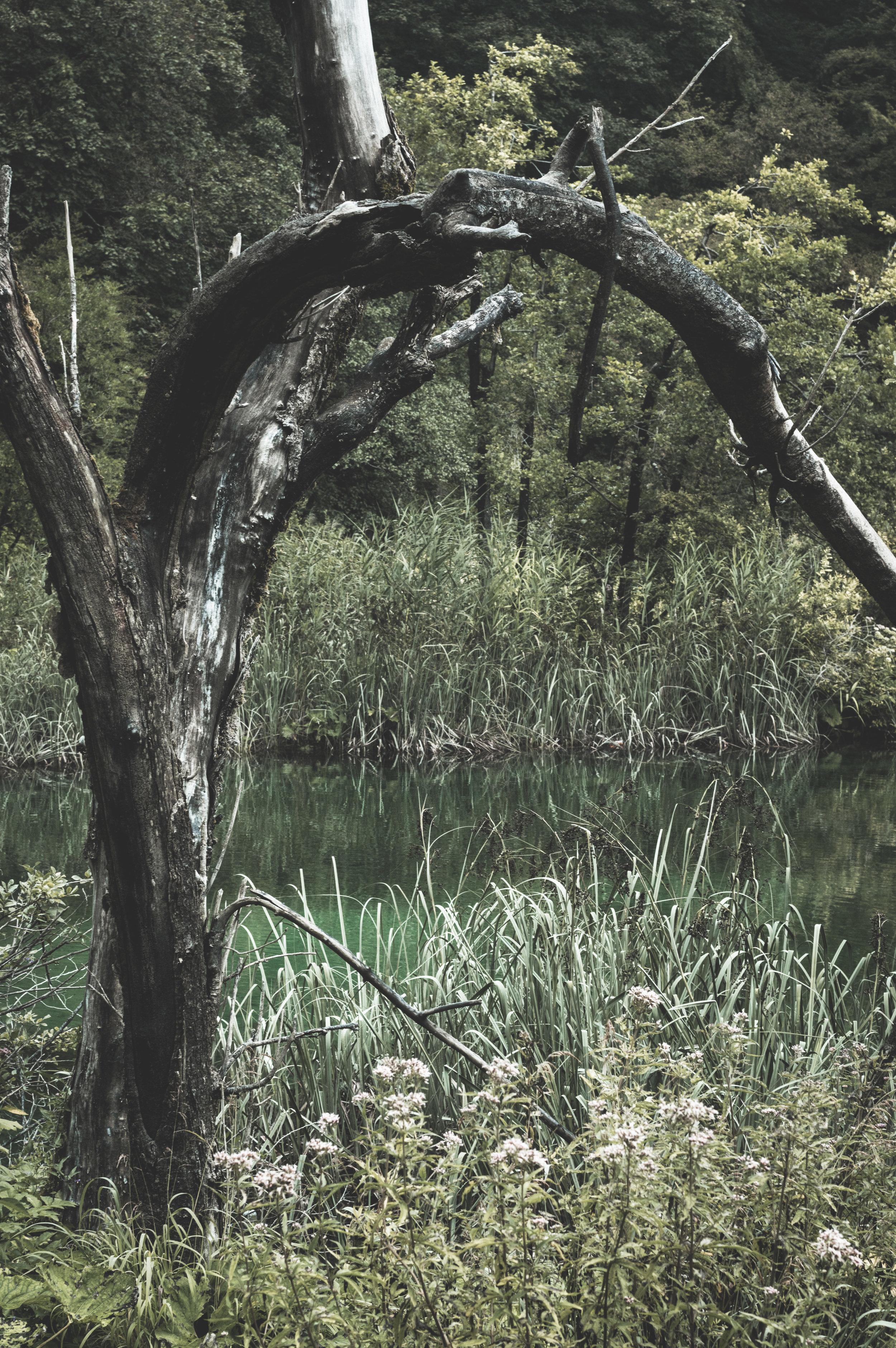 Plitvice Lakes.jpg