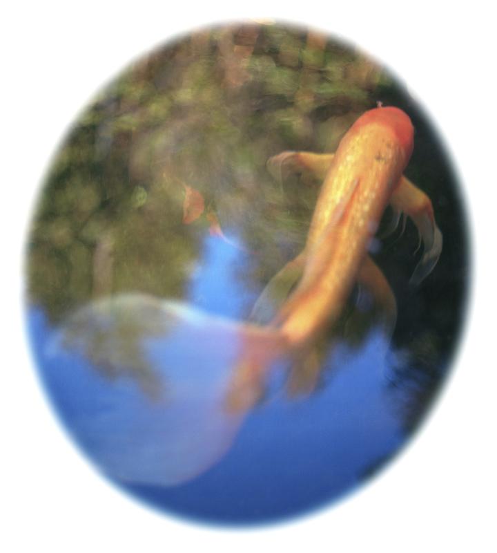 Koi Fish 720X800-PIX webcopy dup.jpg