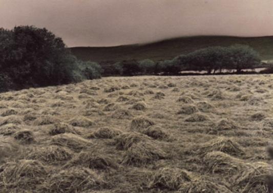 haystackswebcopy.jpg
