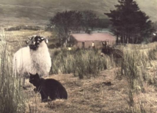 bina's animals duplicate.jpg