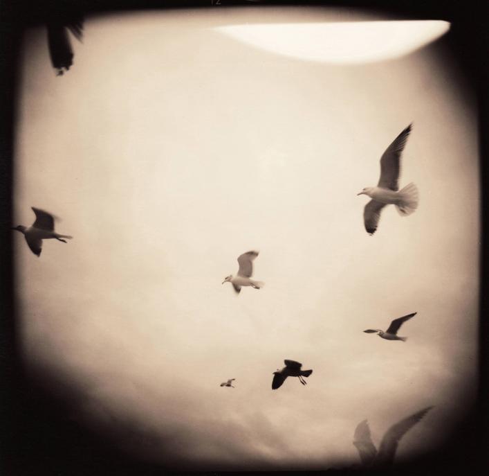 birds-angel webcopy.jpg