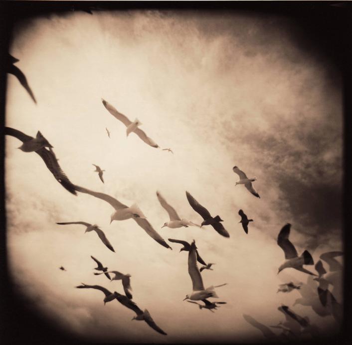 flock webcopy.jpg