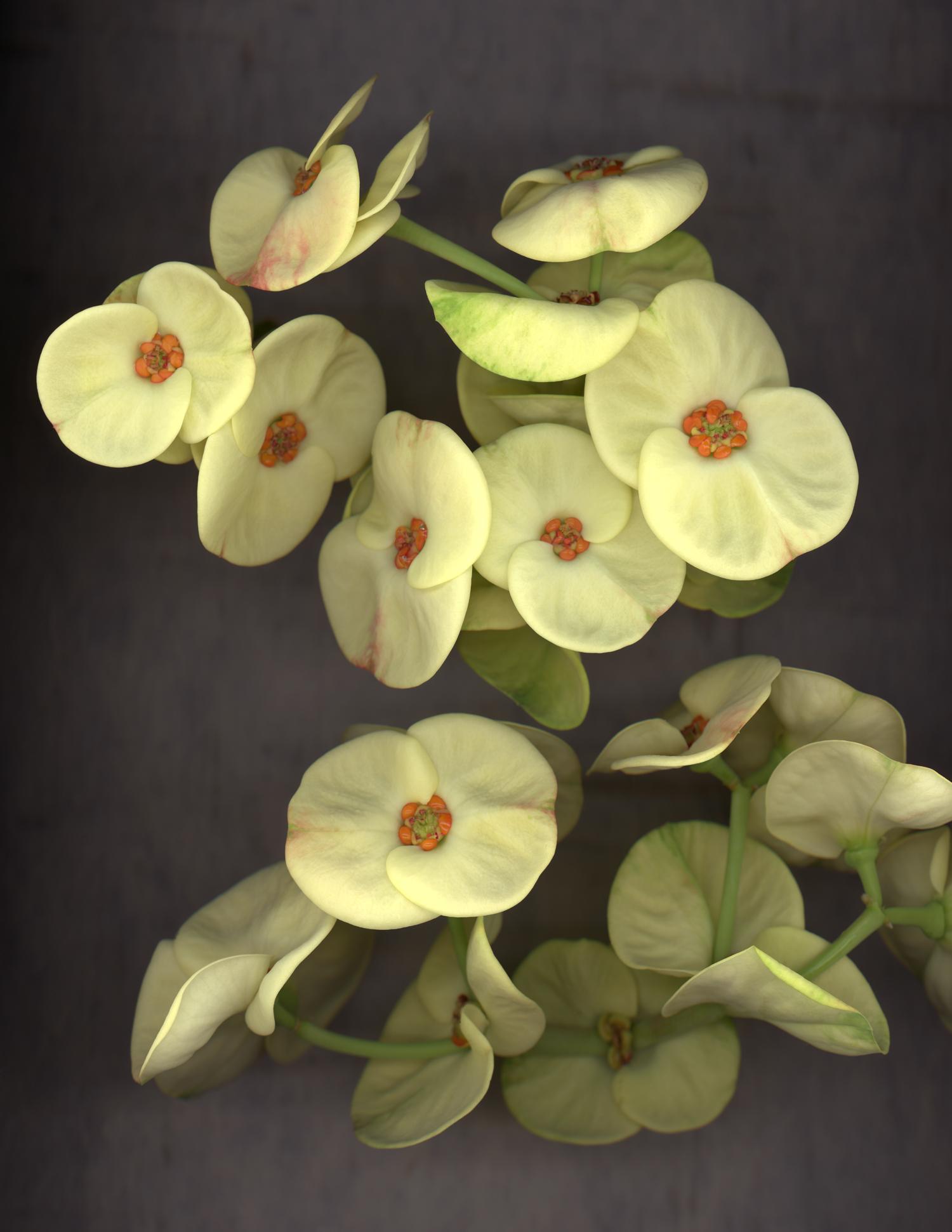 maria elena's flower for website.jpg