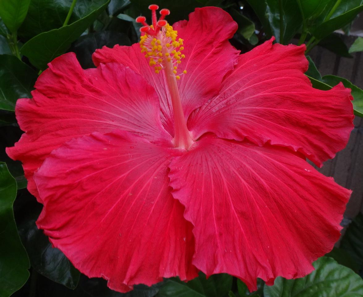 Scarlet Beauty 11-30.jpg