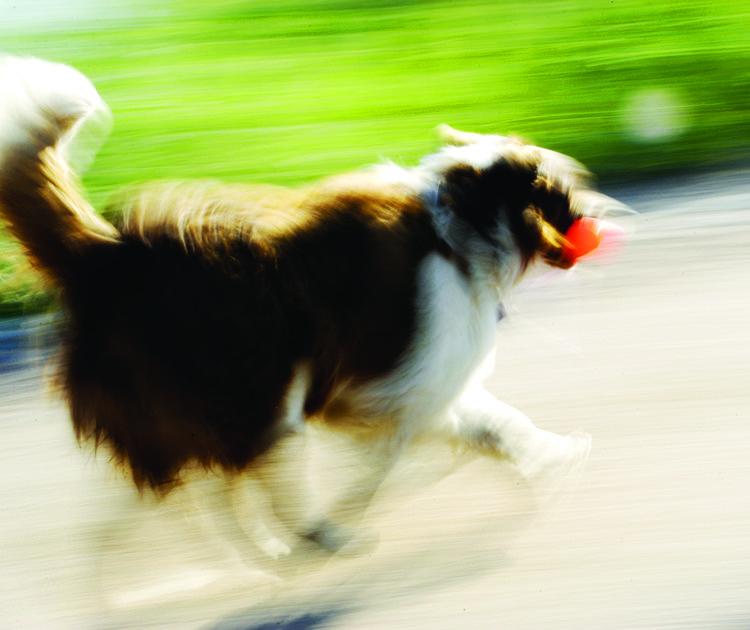 Dog Running.jpg