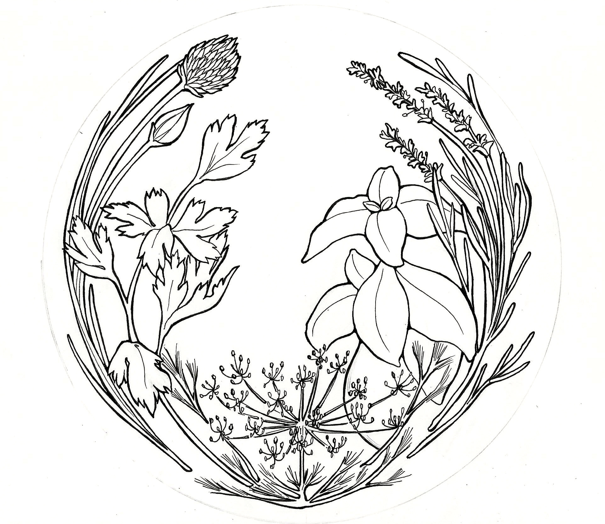 herbcircle.jpg