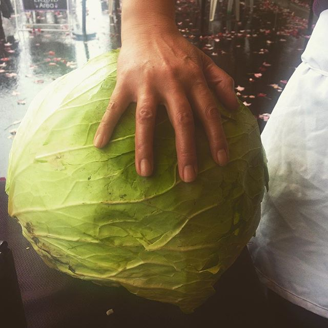 We picked up a 22lb cabbage from #sungoldfarms to prepare for the #wilsonvillefarmersmarket tomorrow! We will be joining their harvest market every other Sunday until the end of November! #pdxeats #portland #portlandfarmers #farmtofork #pdx #portlandfoodie #pdxfarmersmarket