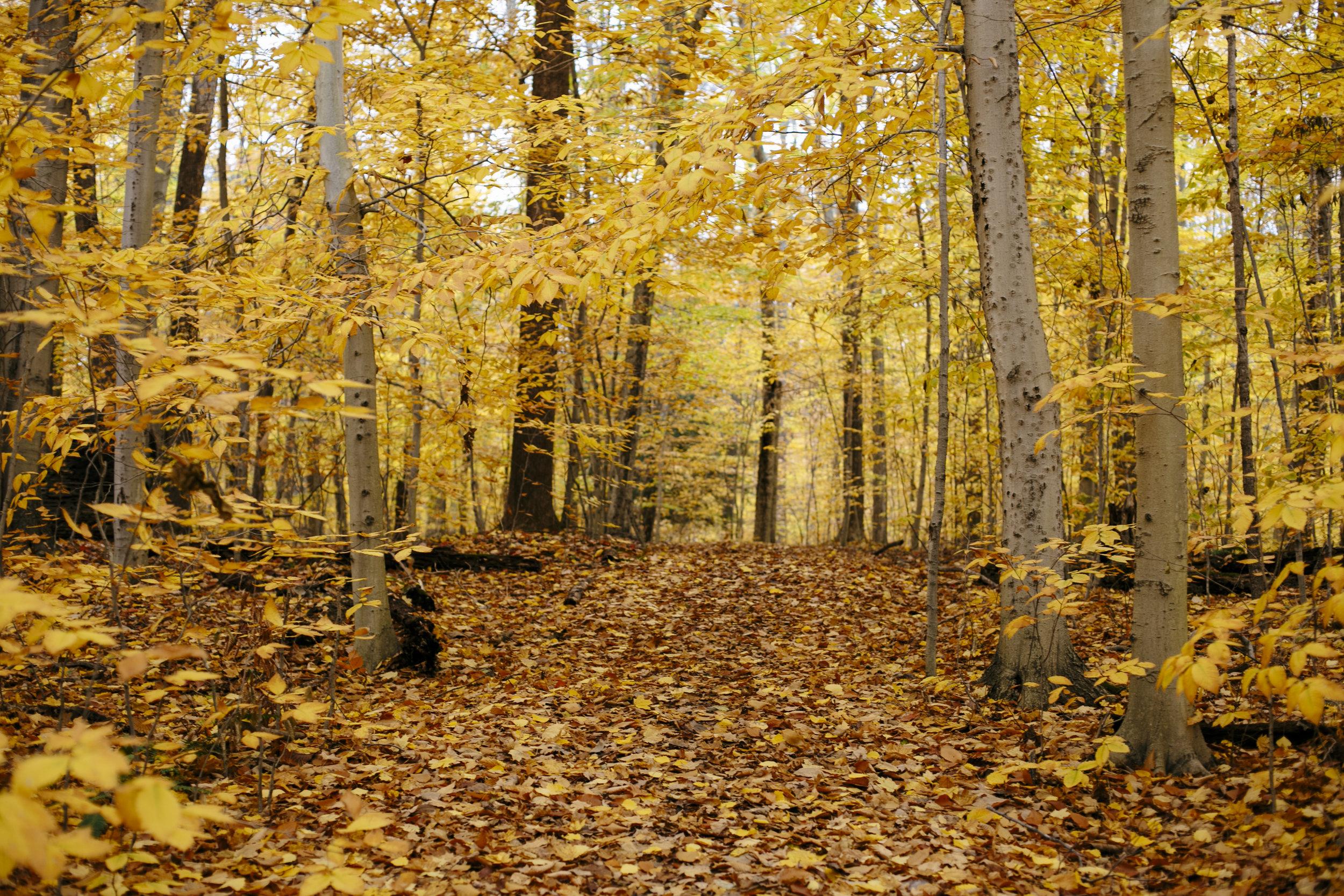autumn golden-3.jpg