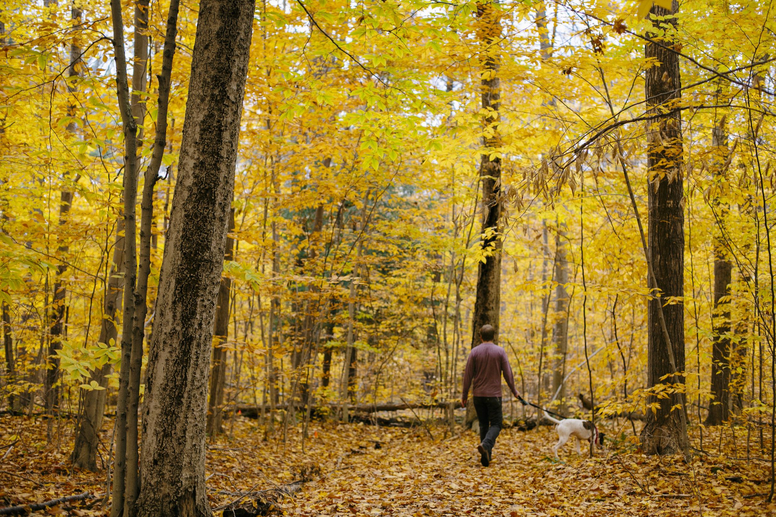 autumn golden-5.jpg