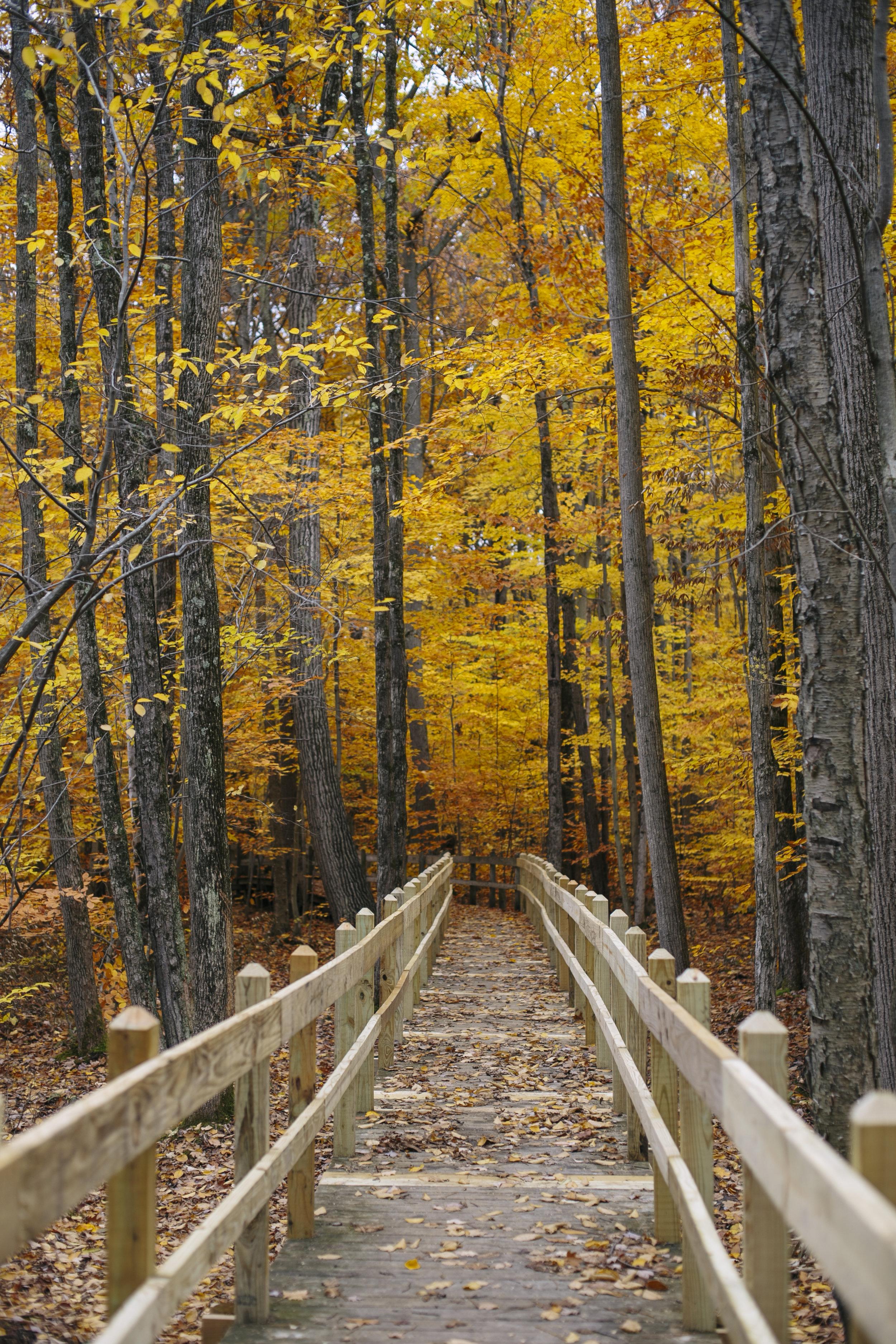 autumn golden-15.jpg
