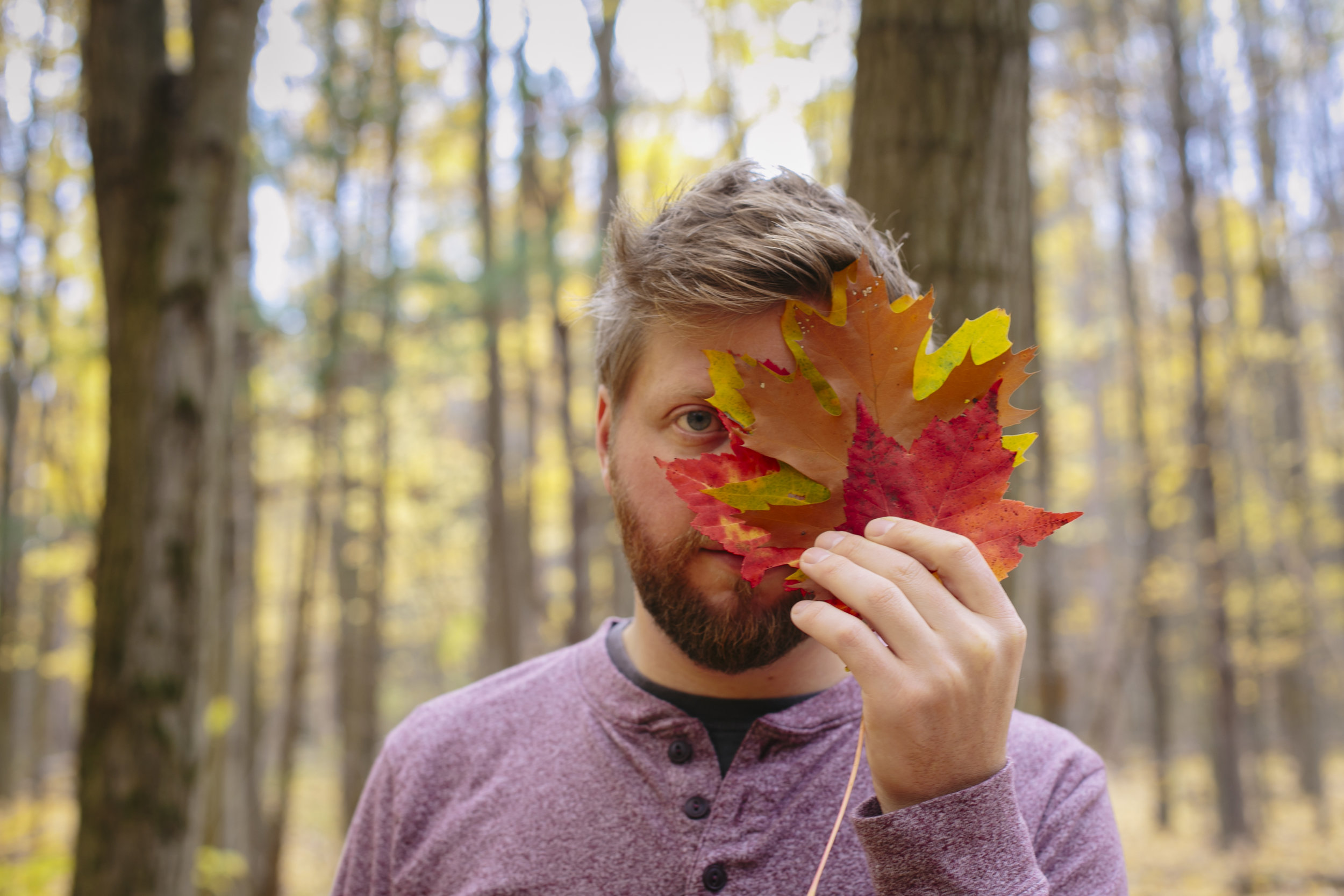 autumn golden-17.jpg