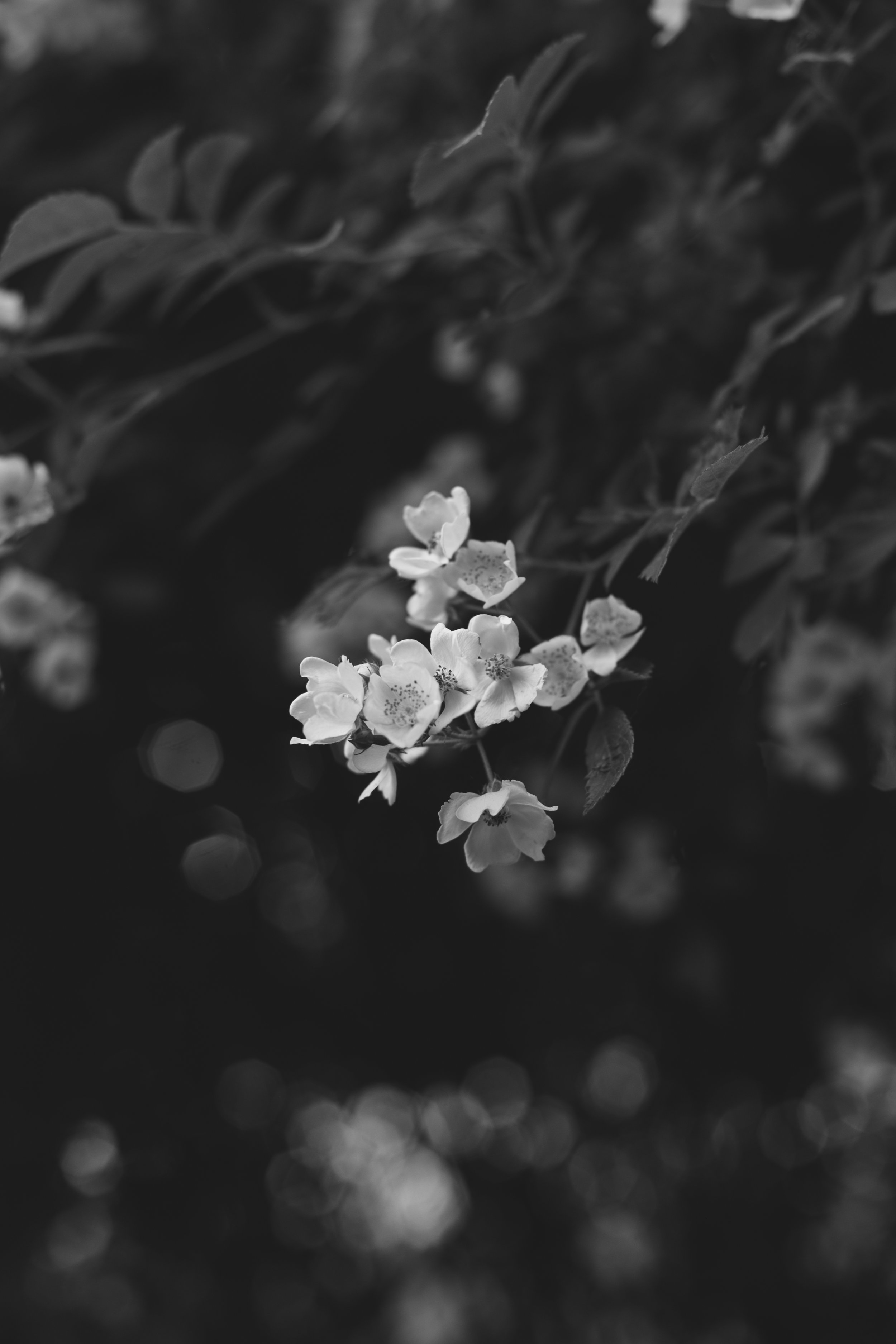 b&w flowers 2.jpg