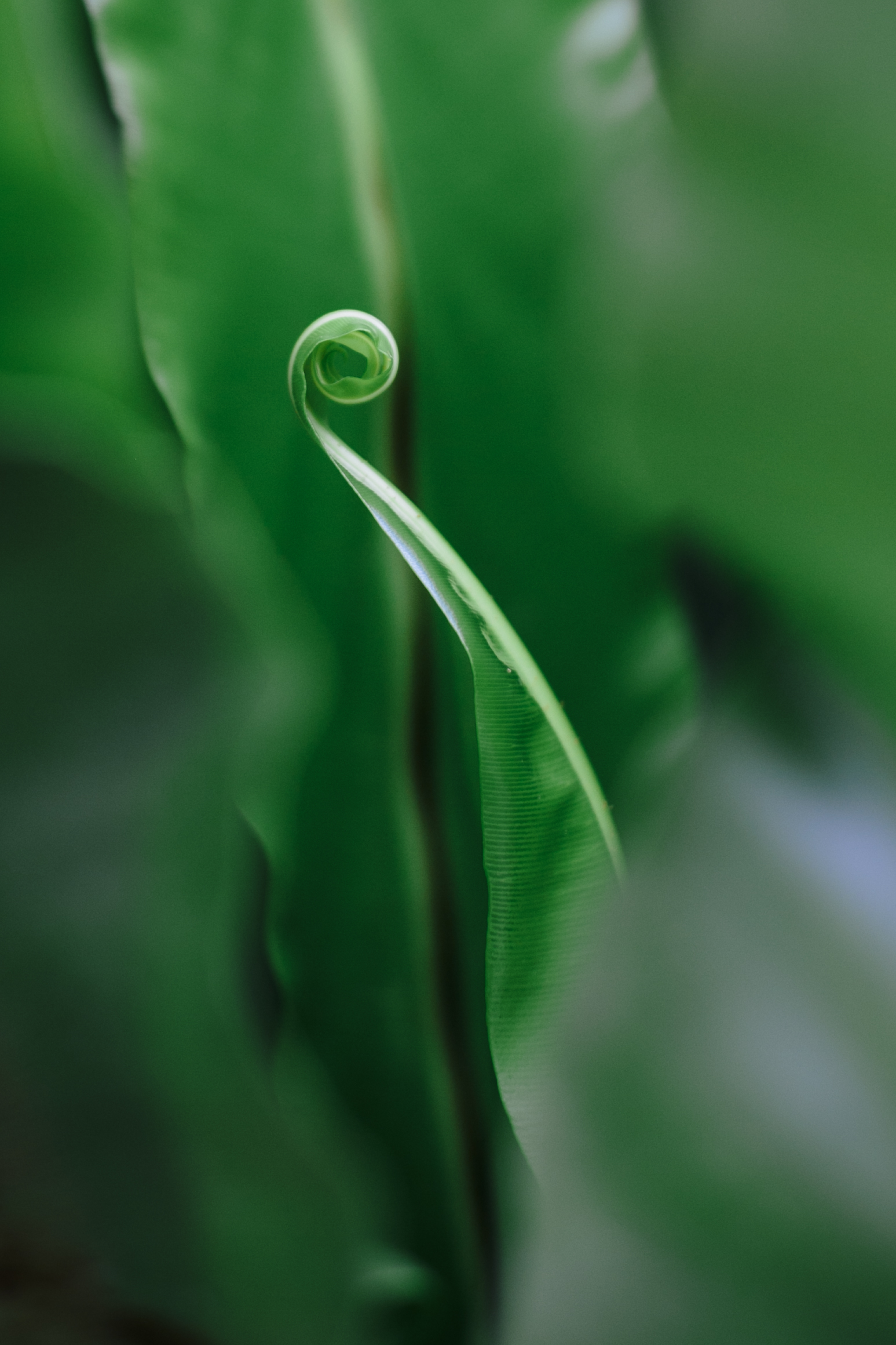 Botanic print4.jpg