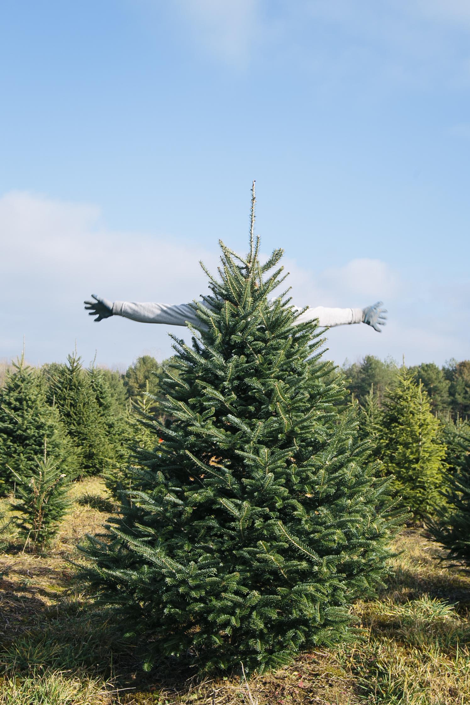 Christmas 15ing-5.jpg