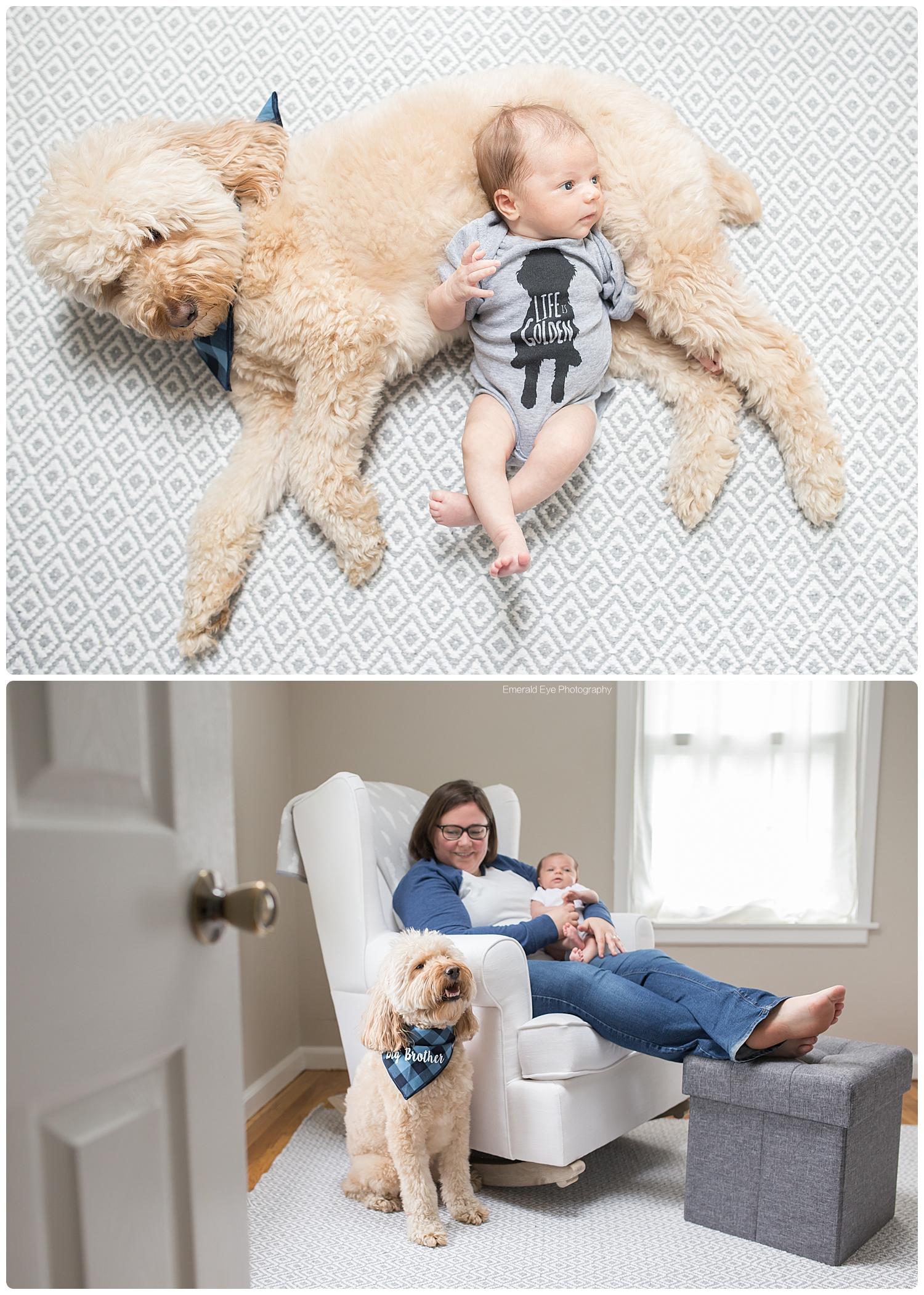 massachusetts-baby-goldendoodle-photojpg