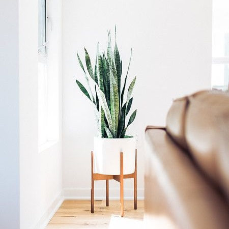 DESIGN ADVICE  Decorating with Houseplants | 5.16.18  READ MORE