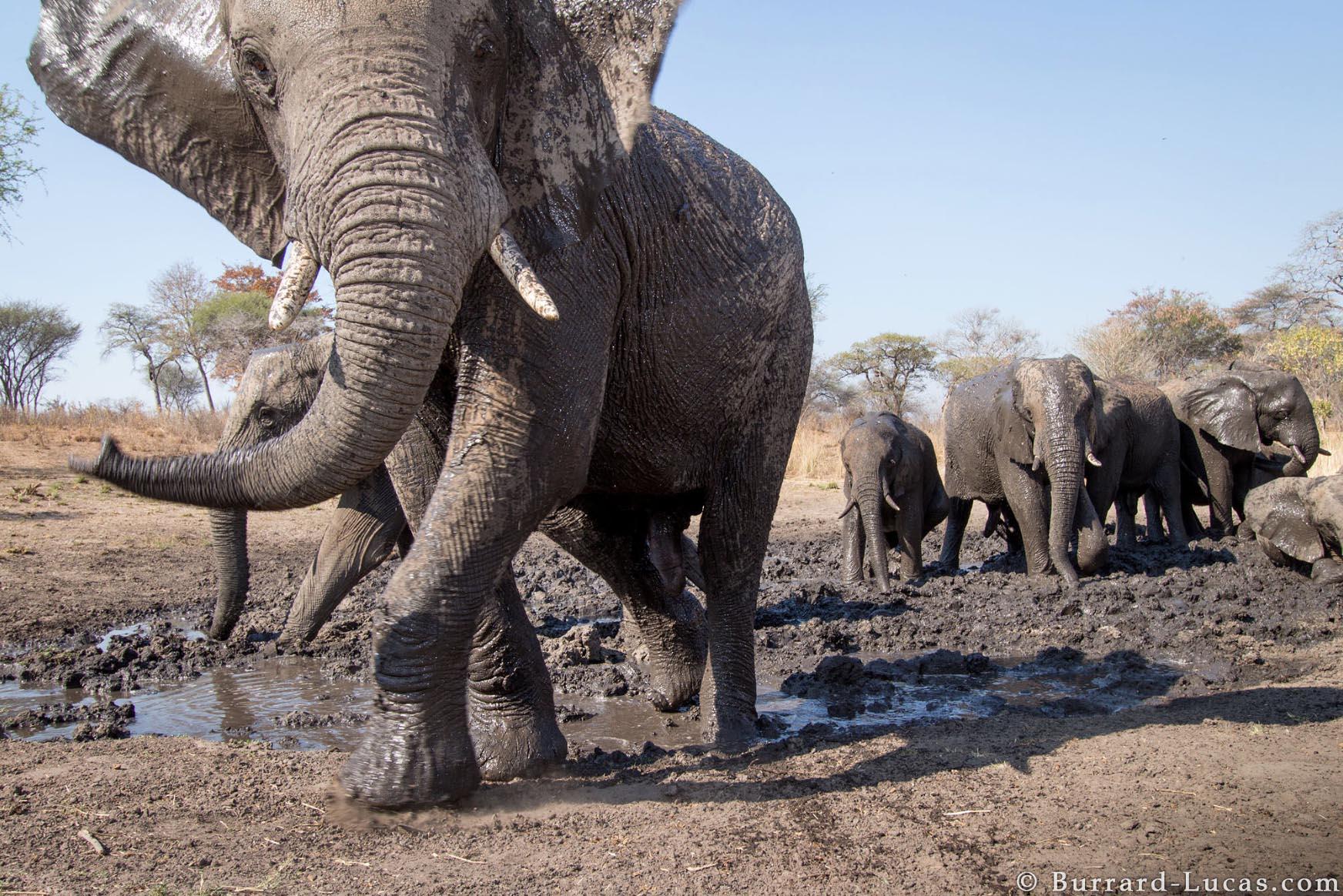 Kaya Safari B-L Elephants.jpg