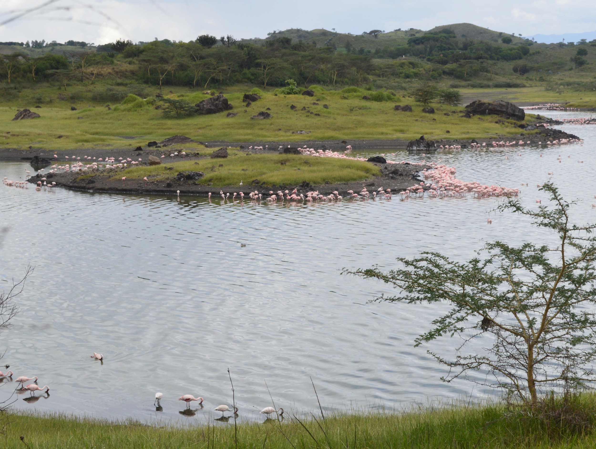Adam & Wendy Arusha Flamingos.jpg