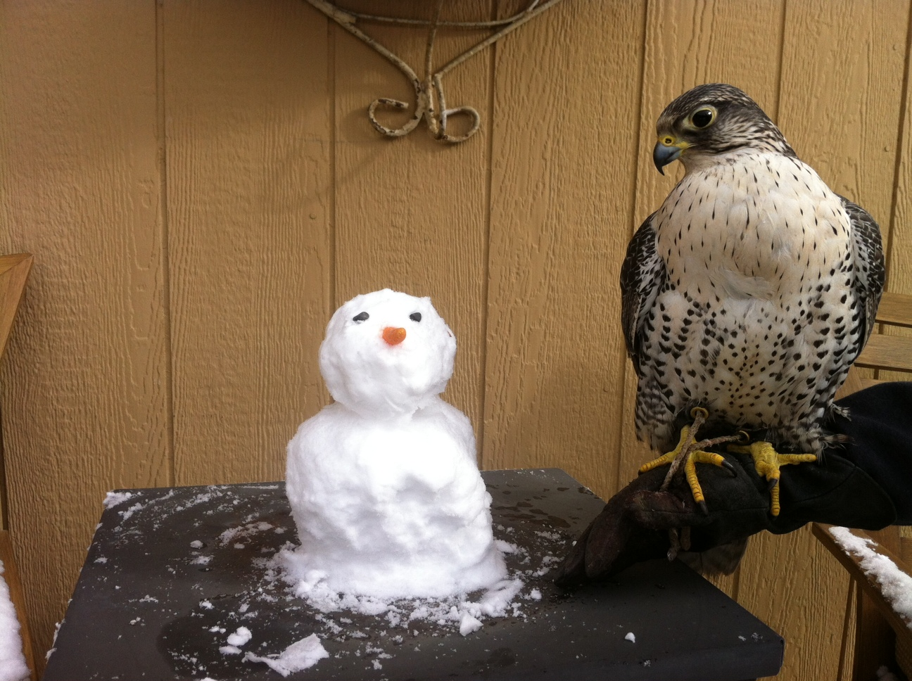 The_Snowman_and_the_Falcon_2014.JPG