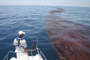 Wildlife biologist surveying oiled sargassum in Gulf of Mexico