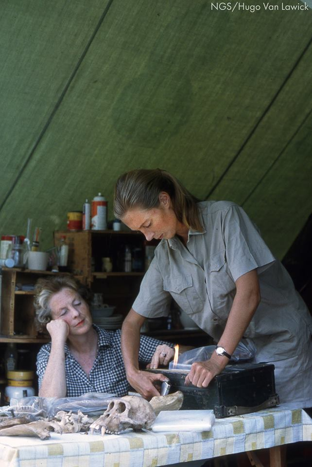 "Jane Goodall and her mother Margaret ""Vanne"" Myfanwe Joseph in camp (Photo: Hugo Van Lawick, National Geographic Society)"