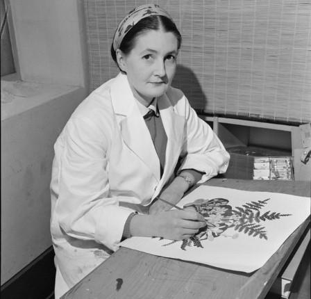 Botanical artist Nancy Adams at work