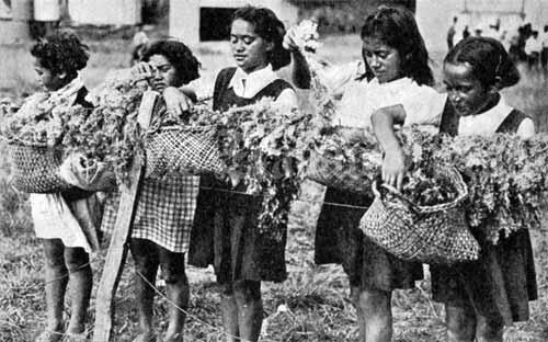 School girls from Raukōkore Native School, Bay of Plenty, hanging out agar seaweed to dry in 1941.