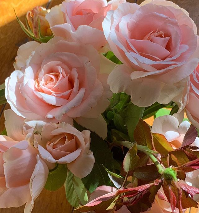 One of the loveliest last bouquets of the season. . . . #rose #inspiration