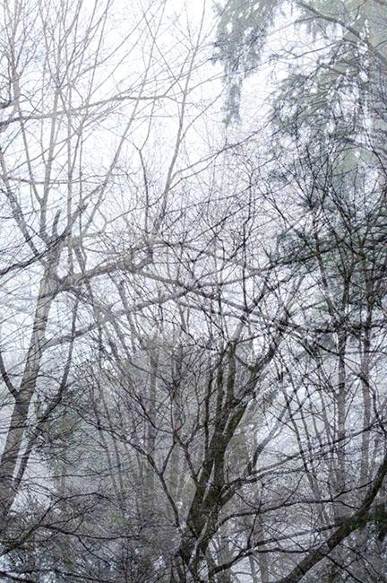 trees_08.jpg