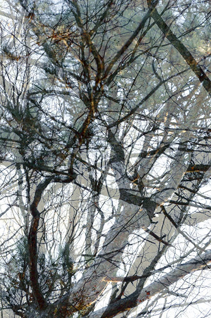 trees_12.jpg