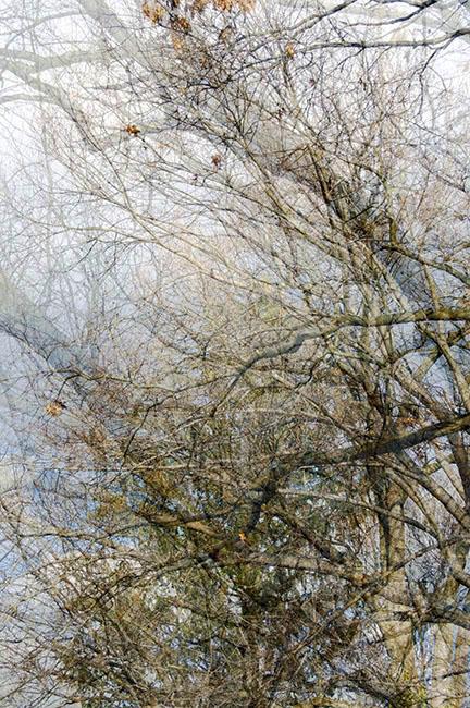 trees_14.jpg