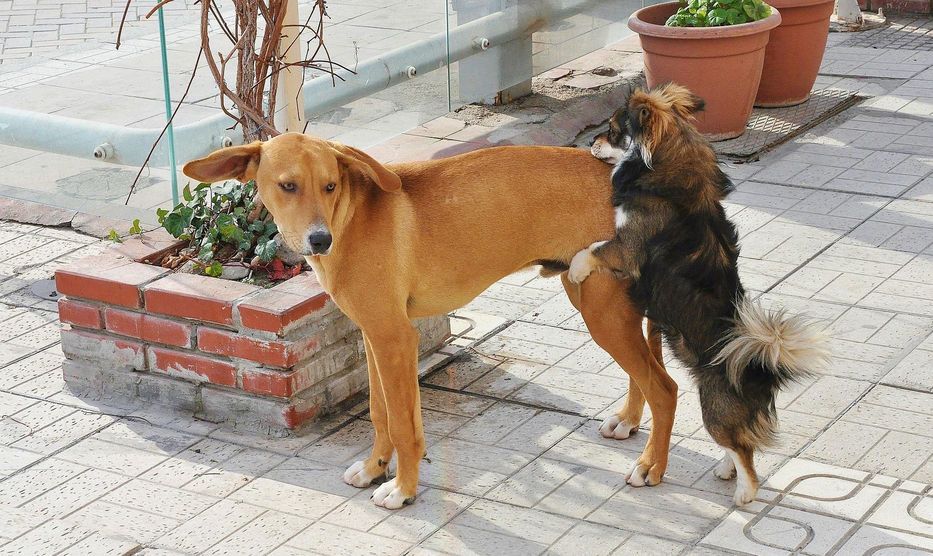 dog-606041_1920 (1).jpg