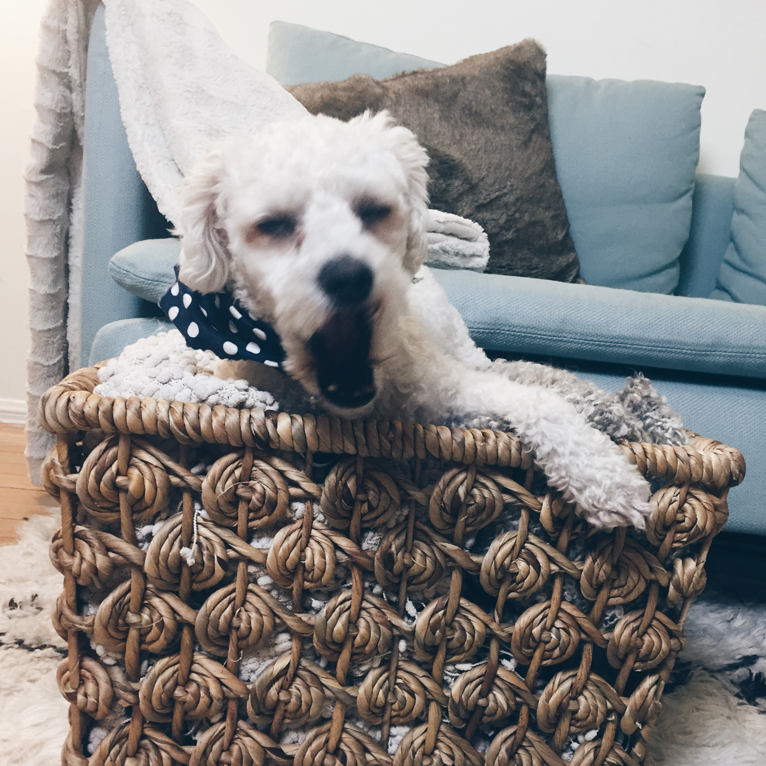 A basket full of cozy blankets. This is the time of year when snuggling is all the rage. I am very happy to have this little fur child to do just that with.