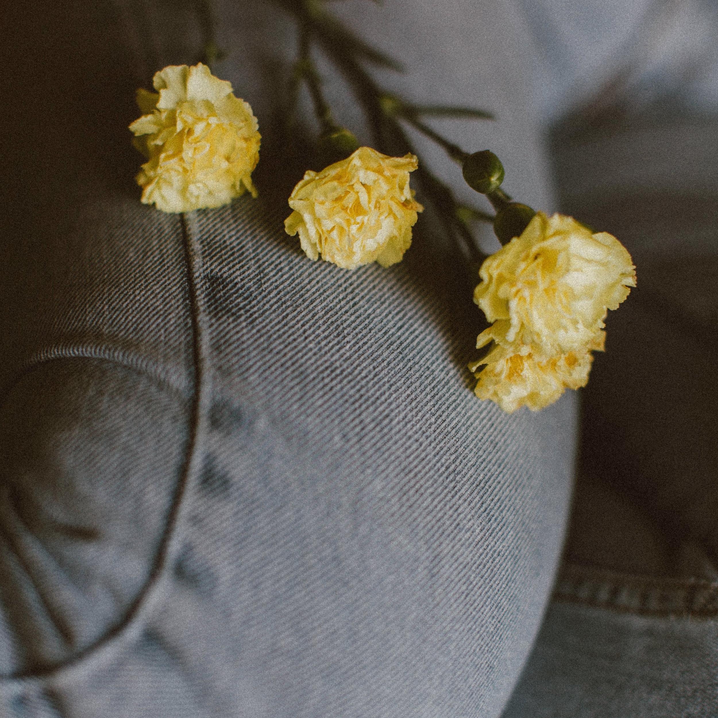 frank-flores-464933.jpg