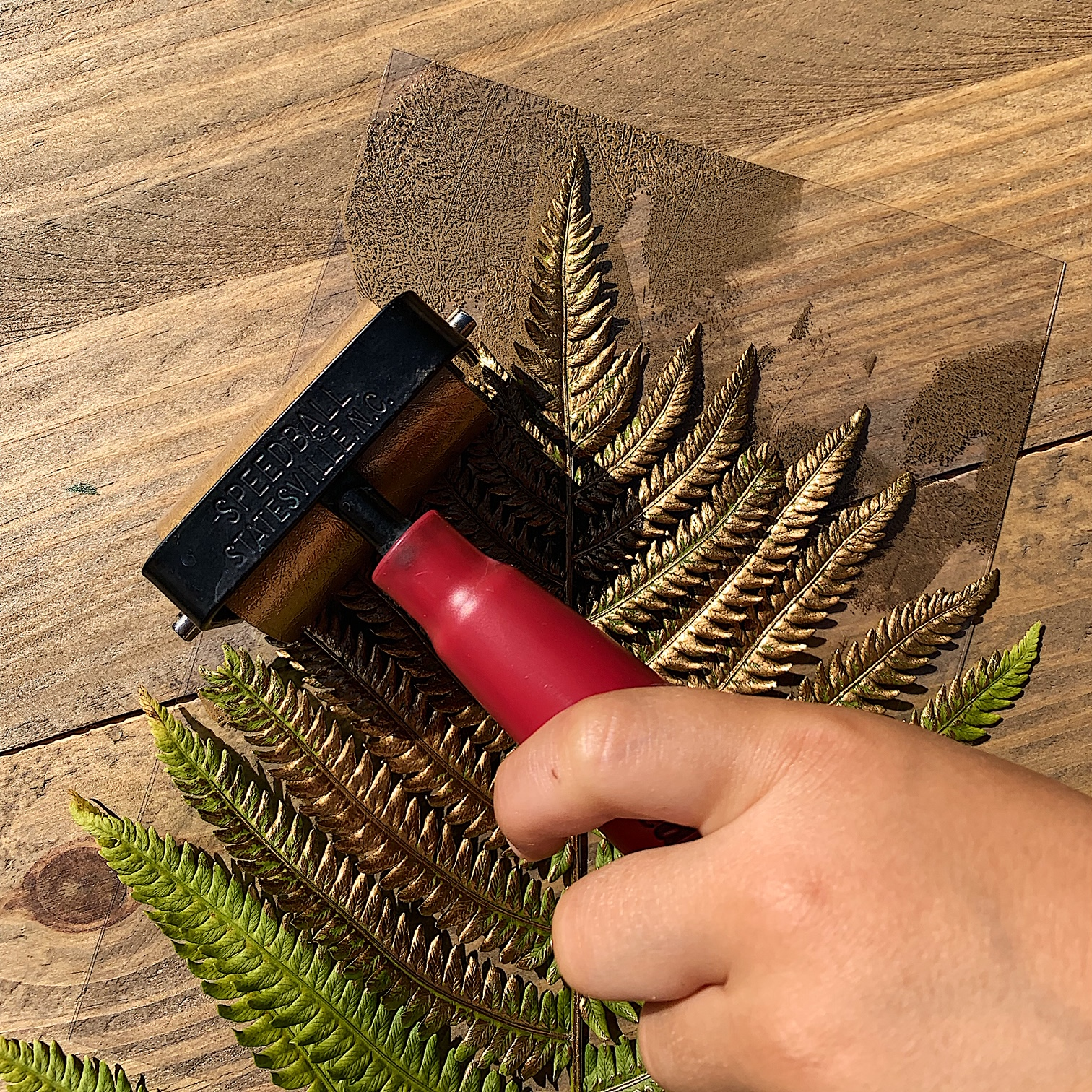 Ink your clipping - Depending on the fragility of your item, make sure you roll it out gently and in a direction that does not pull or tear your little treasure.